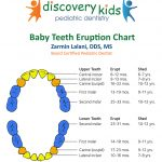 Baby Teeth Eruption Chart At Discovery Kids Pediatric Dentistry