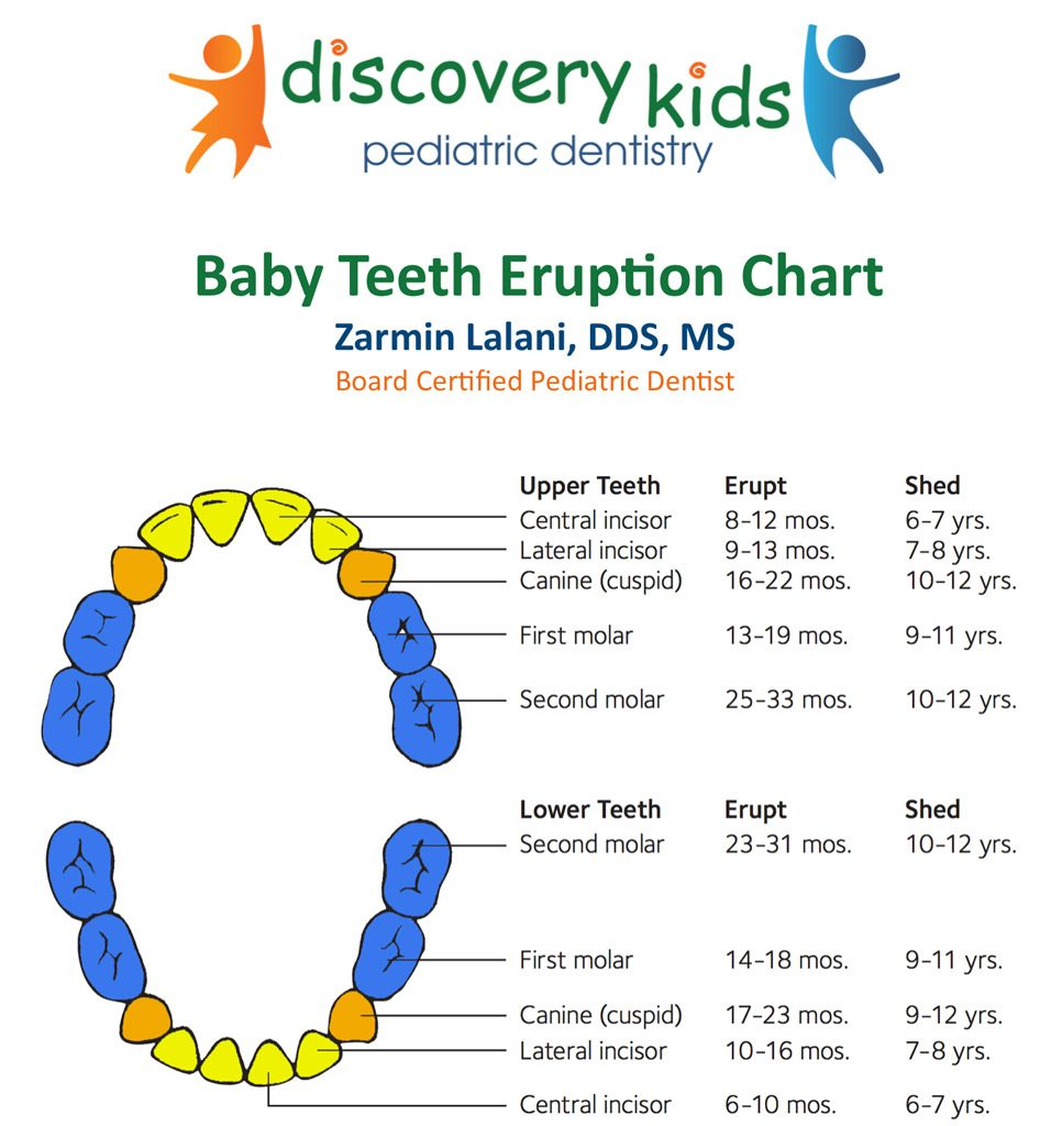 Teething in Babies and Baby Teeth Eruption Chart At Discovery Kids Pediatric Dentistry