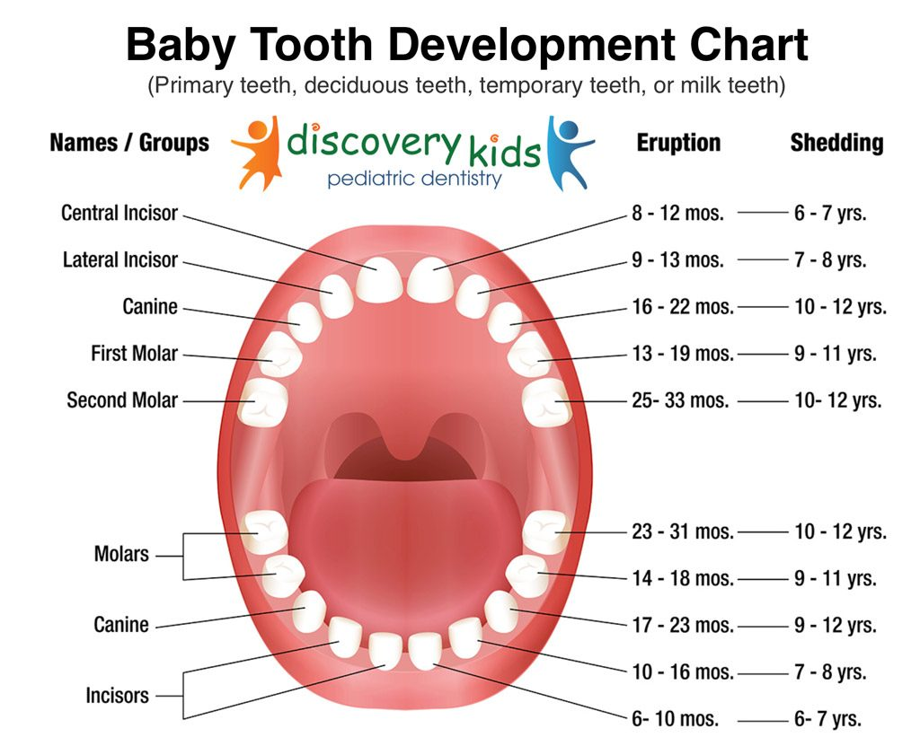 Baby teeth development chart by Dr Lalani in Frisco