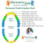 Permanent Tooth Eruption Chart by Discovery Kids Pediatric Dentistry