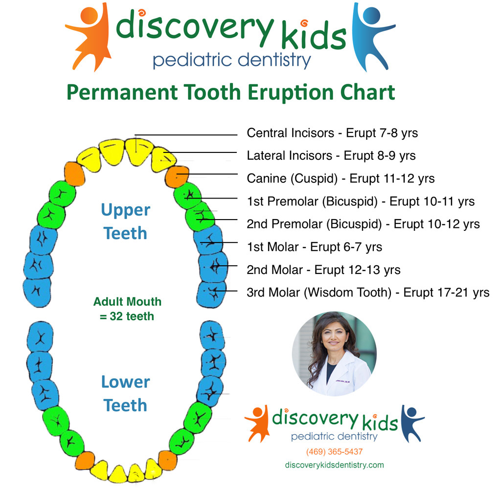 Gallery discovery kids pediatric dentistry frisco permanent tooth eruption chart by discovery kids pediatric dentistry ccuart Choice Image